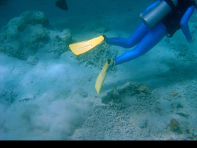 Diver kicking up sediment